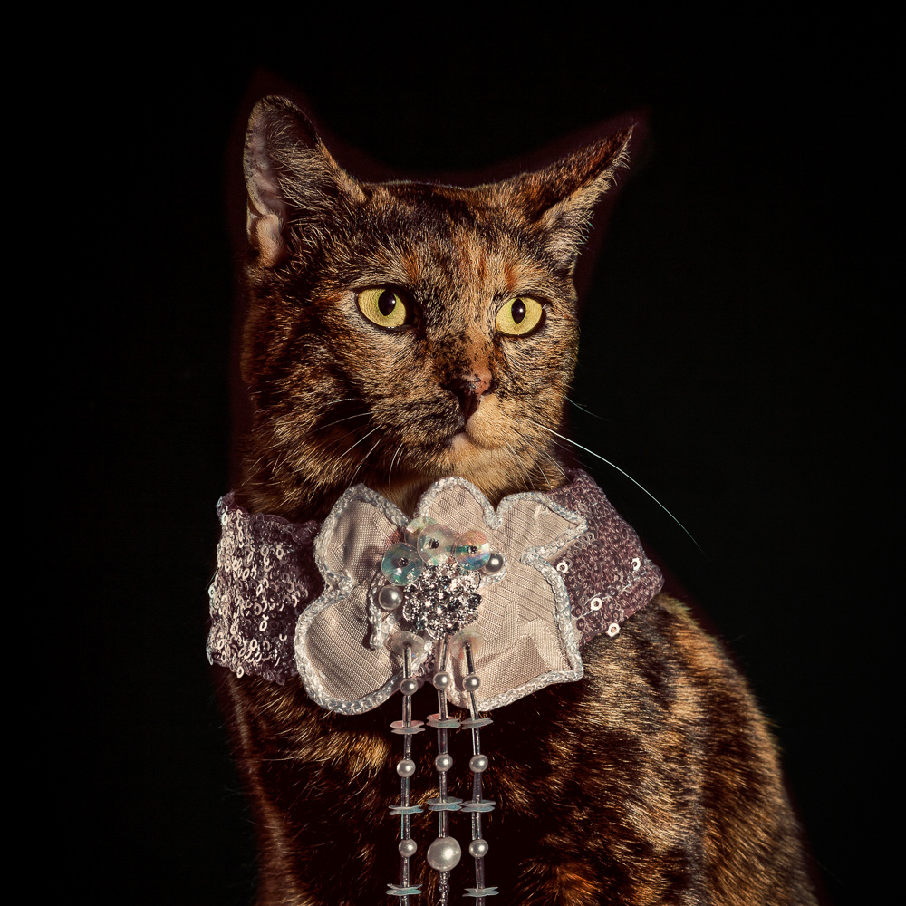 http://payload381.cargocollective.com/1/17/562320/9924899/Holly_Andres_Elizabethan-Cat-Collars_-2-of-10_1000.jpg