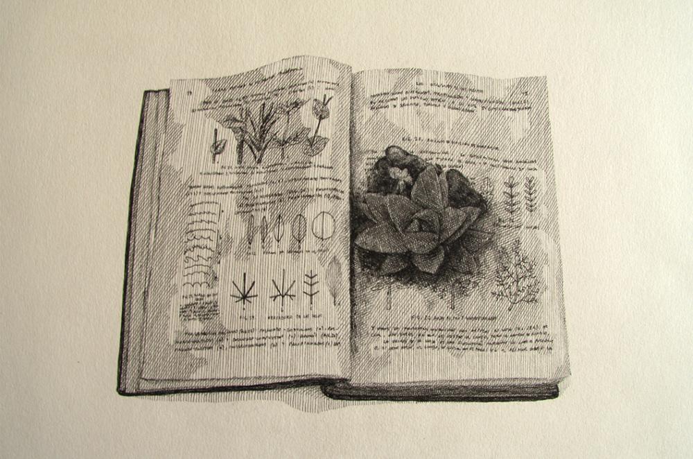 Dibujos Alcances Bot Nicos Libros Rodrigo Arteaga