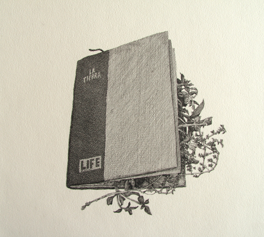 Worksheet. Botanical scope drawings books  Rodrigo Arteaga